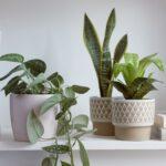 Τα παράσιτα που προσβάλουν τα φυτά σας!