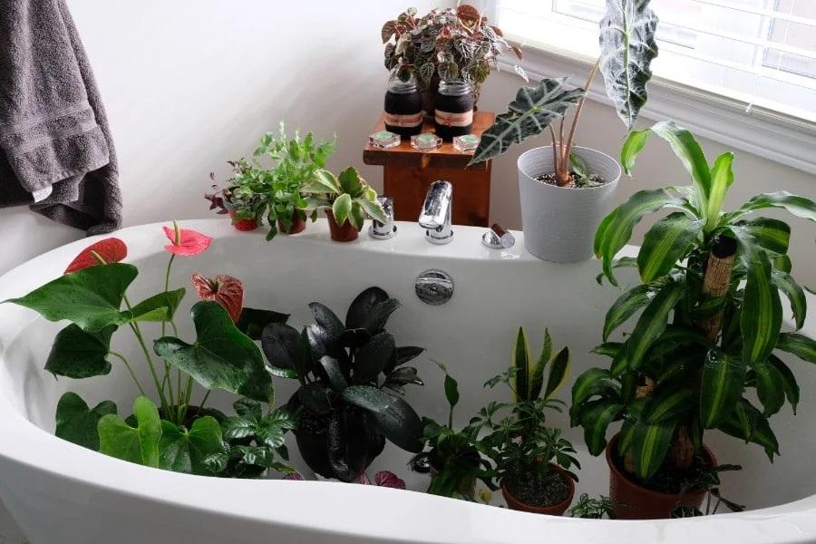 Πώς θα φροντίσετε τα φυτά σας, ενώ λείπετε σε διακοπές!