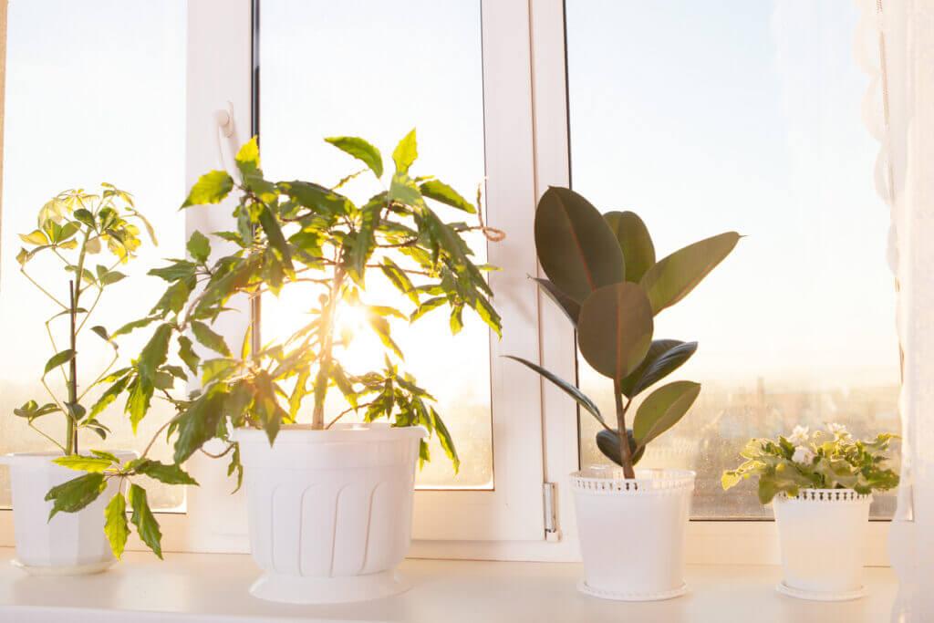 Πώς θα φροντίσετε τα φυτά σας το καλοκαίρι!